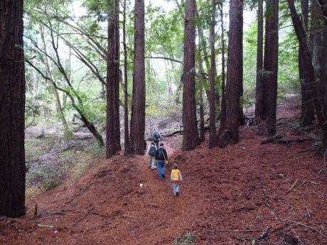 Trail Work Photos by KarenKefauver - 031